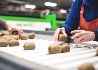 kiwifruit quality control