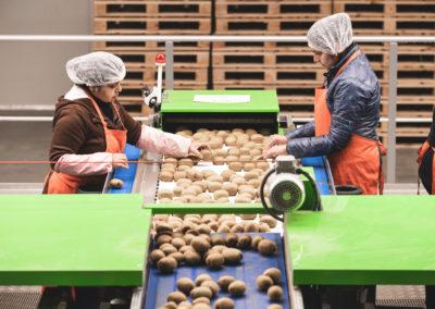 MPAC grading kiwifruit